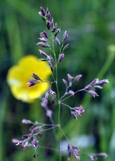 Wild gras met bloemen