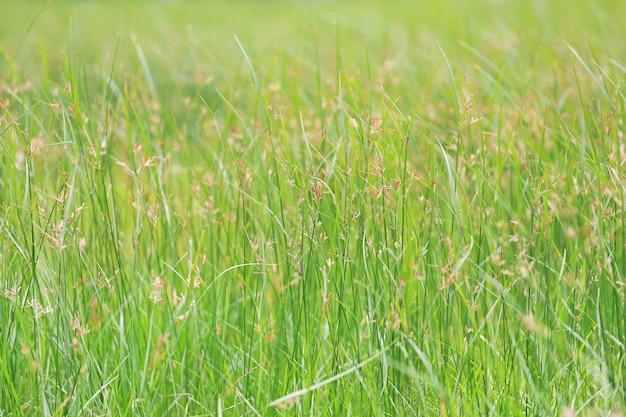 Wild gras op groene aardachtergrond.