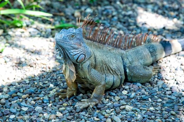 Wild life concept dierenrechten red biodiversiteit natuurgebied luie hagedis ontspannen