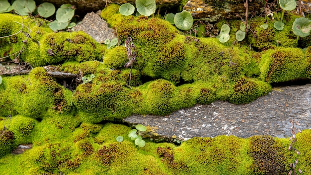 Wild mos met kleine planten en rotsen