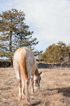 Wild paard in het bos buiten