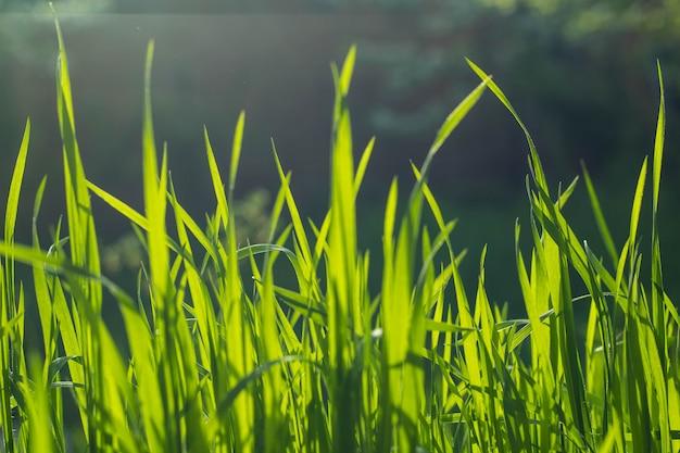 Wild weide groen gras