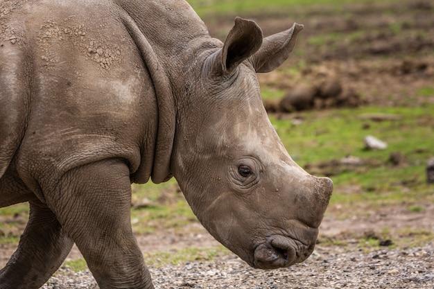 Wilde afrikaanse dieren