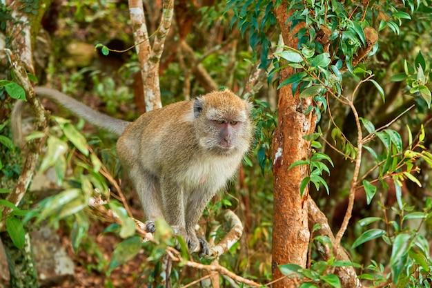 Wilde apen op een boomtak.