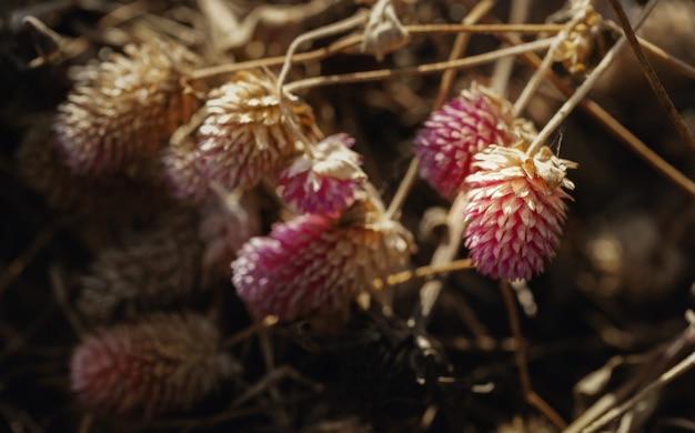 Wilde bloem in droogteland.