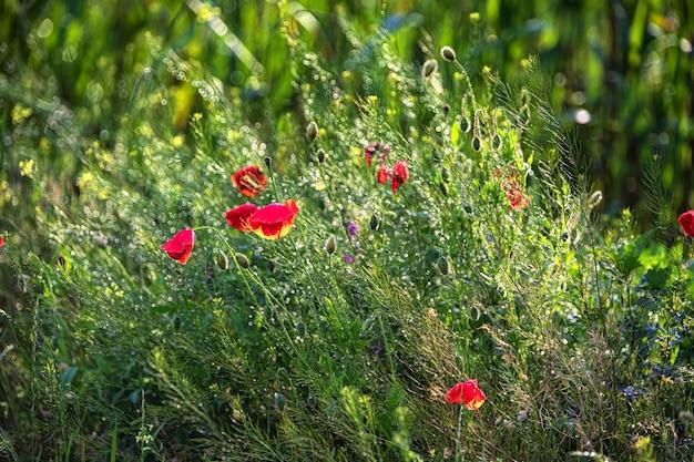 Wilde bloemen en grassen na regen ondiepe scherptediepte