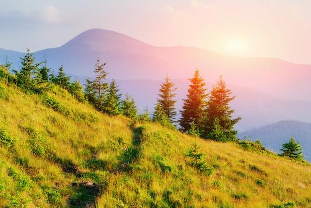 Wilde bloemen in de bergen bij zonsondergang. karpaten, oekraïne, europa