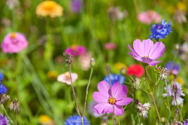 Wilde bloemen op een weide in een zonnige dag.