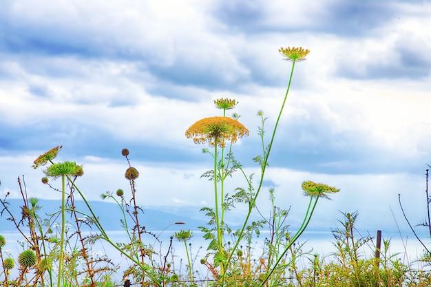 Wilde bloemen tegen een blauwe lucht en een meer