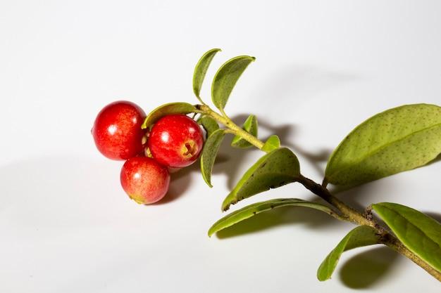 Wilde bosbes foxberry, bosbessensap met bladeren met bladeren op een tak, isoleren op een witte achtergrond