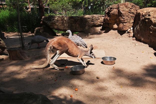 Wilde dieren in de taronga-dierentuin in sydney, australië