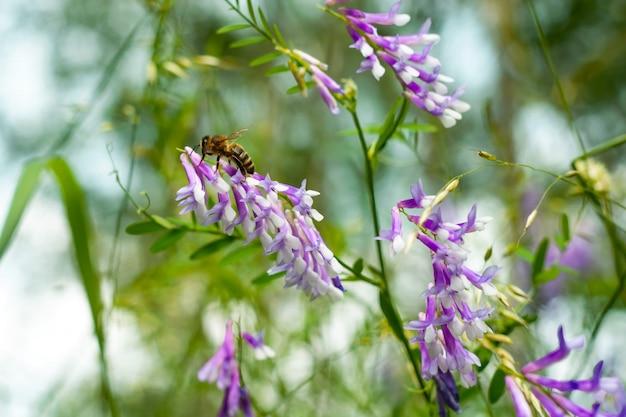 Wilde gele bloemen met een bij die stuifmeel verzamelt tegen een diepblauwe hemel.