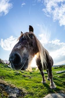 Wilde grappige paarden in de groene berg