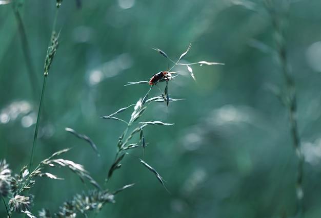 Wilde gras achtergrond