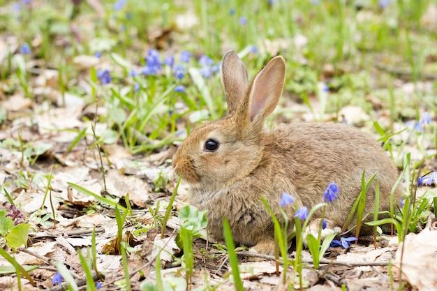 Wilde haas op een bloeiende weide in het voorjaar.