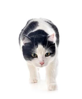 Wilde kat geïsoleerd op wit