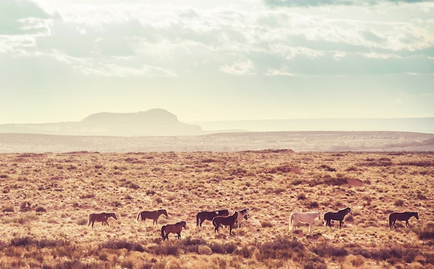 Wilde mustangs in amerikaanse prairie, utah, vs.