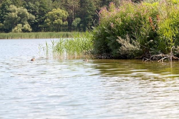 Wilde natuur met vliegen en watervogels