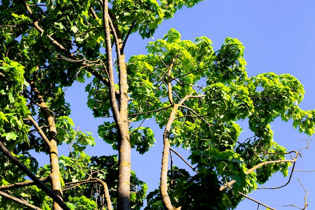 Wilde of stedelijke omgeving met groene bomen, gras en andere voorwaarden voor plantengroei