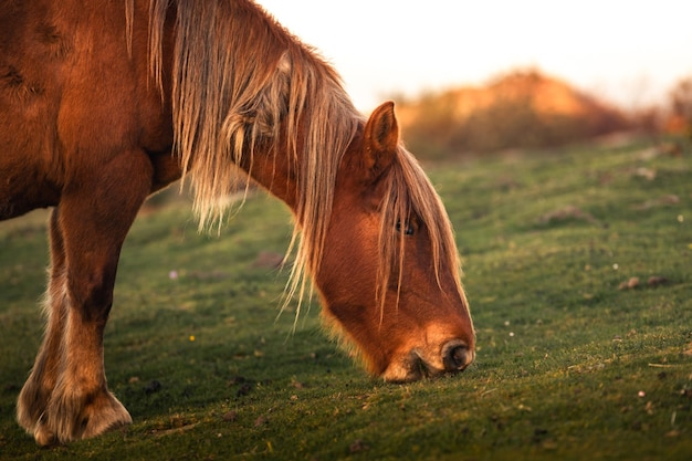 Wilde paarden die gras eten bij de berg jaizkibel, baskenland.