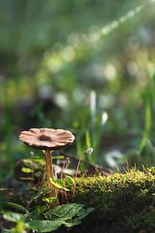 Wilde paddestoelen groeien op bemoste stronk op zonlicht in het voorjaarsbos