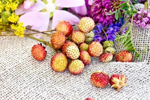 Wilde rijpe aardbeien op de stengels en wilde bloemen tegen de achtergrond van jute