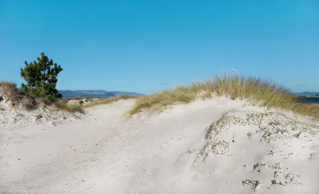 Wilde strandkust met duinvegetatie en blauwe hemel. n