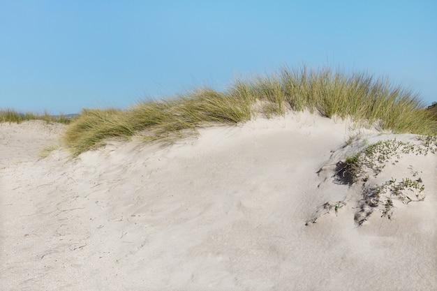 Wilde strandkust met duinvegetatie en blauwe hemel.