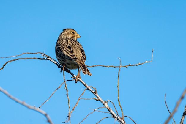 Wilde vogels in de moerassen van de ampurdan.