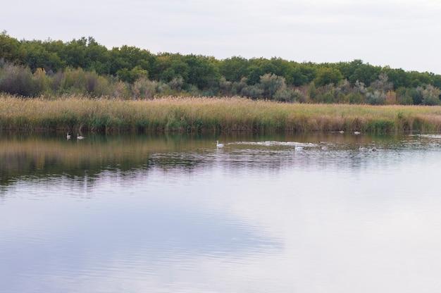 Wilde vogels op de rivier