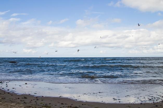 Wilde witte zeemeeuw oceaan zeevogel vliegen over zee de vleugel toon vrijheid van leven wit blauw toon natuur zeegezicht landschap achtergrond
