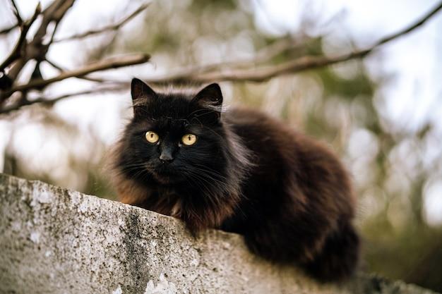 Wilde zwarte kat met groene ogen