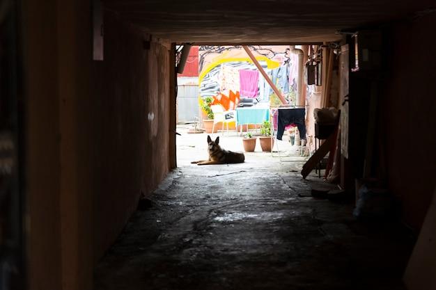 Wilde zwerfkatten en honden in de straten van de stad. hoge kwaliteit foto