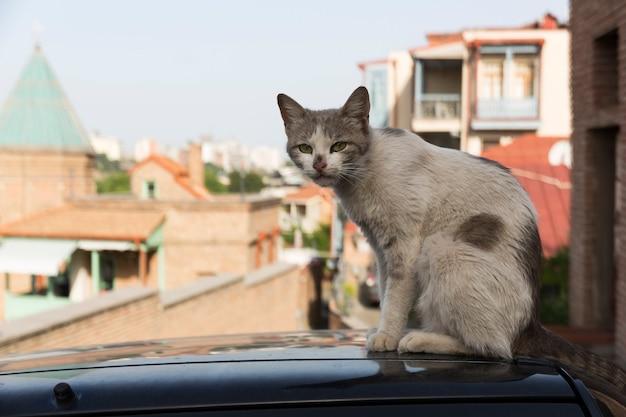 Wilde zwerfkatten en honden in de straten van de stad. tbilisi, georgië. hoge kwaliteit foto