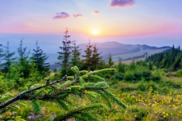 Wildflowers in de bergen bij zonsondergang