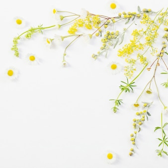 Wildflowers op witboekachtergrond