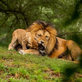 Wildlife zoogdier leeuw en dier