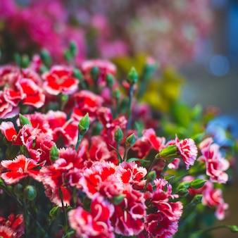 Willekeurige geschotene rode madeliefjes in een bloemenmarkt.
