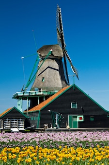 Windmolen in holland