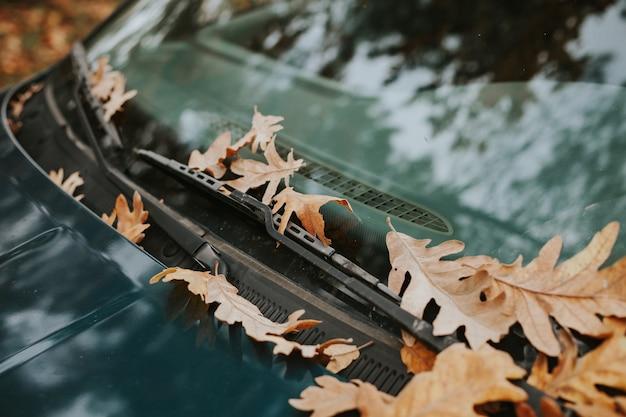 Windscherm van een autohoogtepunt van gevallen bladeren
