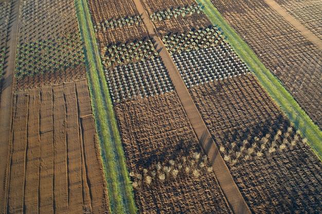 Winkel met een breed assortiment aan sierplanten voor landschapsarchitectuur. drone-weergave. groot assortiment naald-, bladverliezende en bloeiende planten.