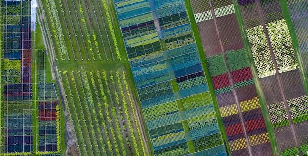 Winkel of kwekerij van sierplanten. drone-weergave