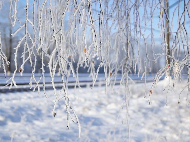 Winter achtergrond. de takken van de boom in de vorst