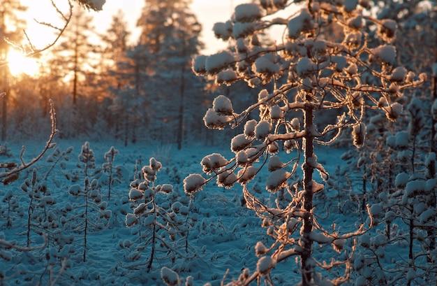 Winter besneeuwd bos bij zonsondergang. mooie kerst landschap. ondiepe scherptediepte.