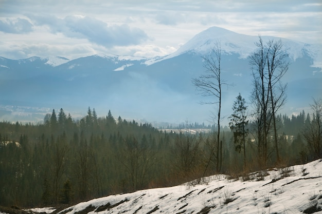 Winter besneeuwde bergen met dennenbos