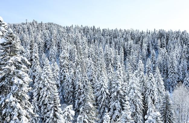 Winter besneeuwde bossen in de bergen. met sneeuw bedekte bergtoppen van de bergketen van de kaukasus in de buurt van het resort arkhyz. bergtoppen bedekt met sneeuw in de winter. winter landschap.