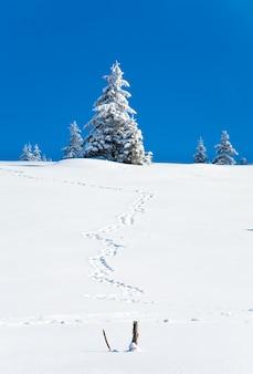 Winter besneeuwde sparren op berghelling op blauwe hemelachtergrond en sporen op sneeuw