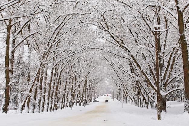 Winter besneeuwde steegje weg. takken van populieren. auto's op met sneeuw bedekte kronkelende landelijke asfaltstraat in de stad. winterwonderland na sneeuwstorm. kerstvakanties, reizen
