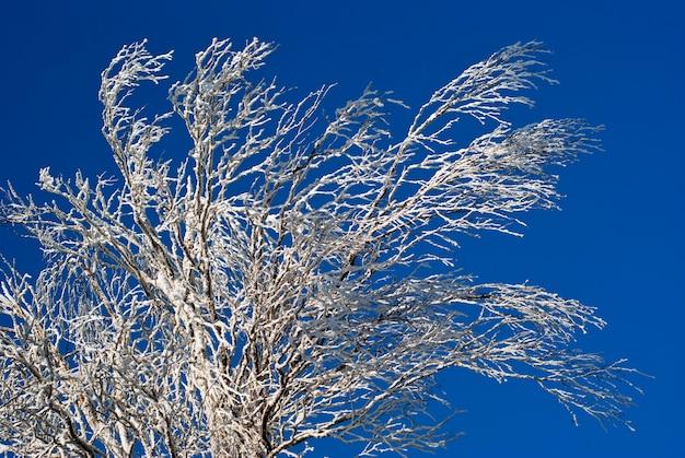 Winter besneeuwde takken van een boom of struik tegen een helderblauwe lucht