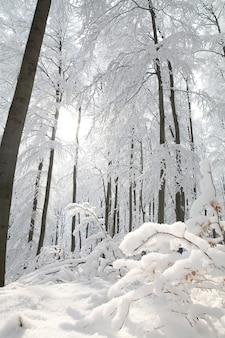 Winter beukenbos op een ijzige zonnige ochtend